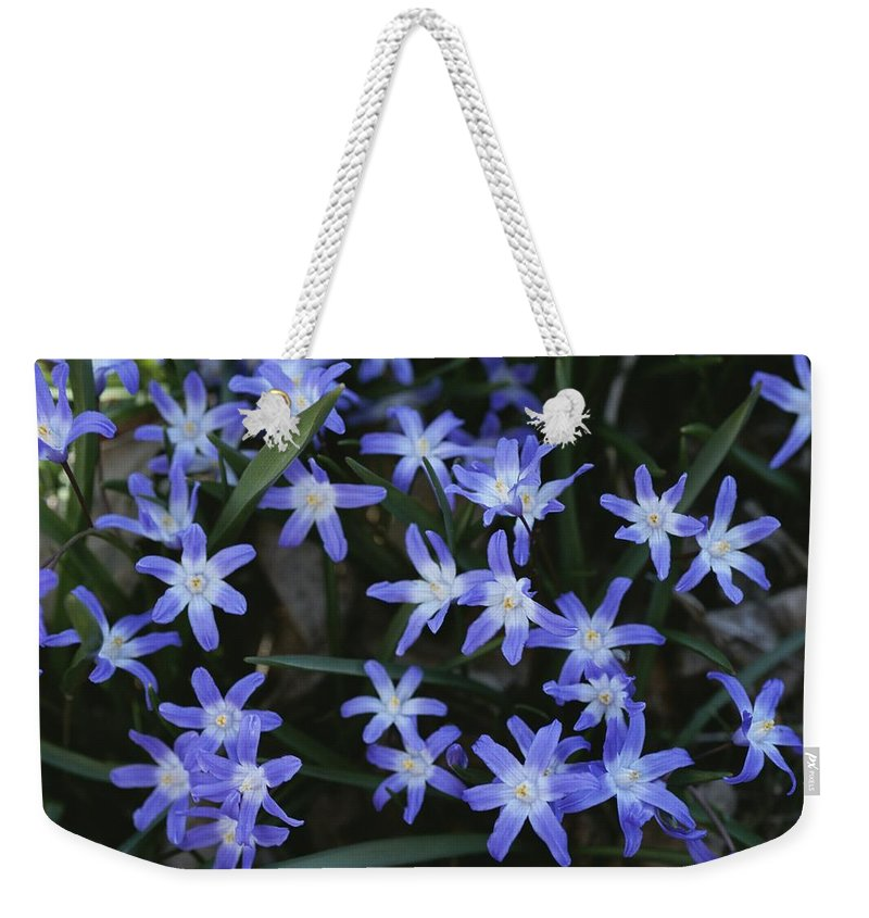 Plants Weekender Tote Bag featuring the photograph Close View Of Spring Flowers by Darlyne A. Murawski