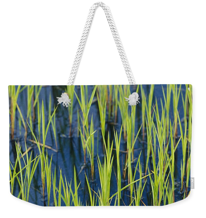 North America Weekender Tote Bag featuring the photograph Close View Of Water Grasses Growing by Skip Brown