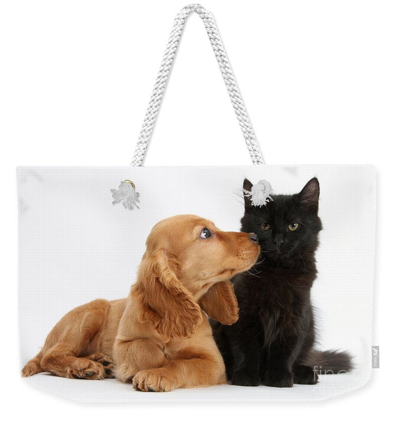Nature Weekender Tote Bag featuring the photograph Cocker Spaniel Puppy And Maine Coon by Mark Taylor