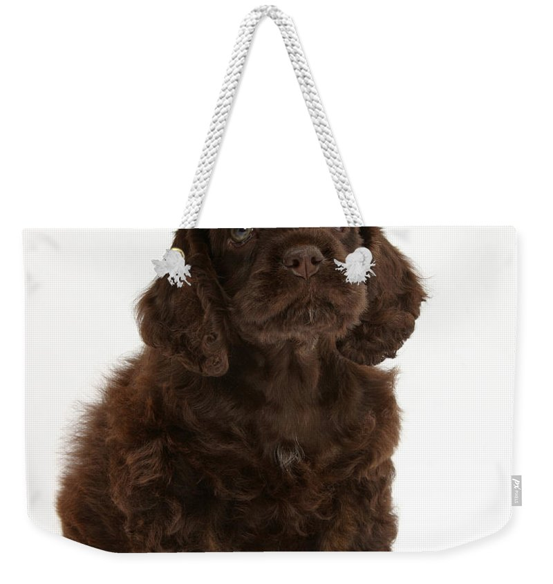 Dog Weekender Tote Bag featuring the photograph Cocker Spaniel Wearing A Hat by Mark Taylor