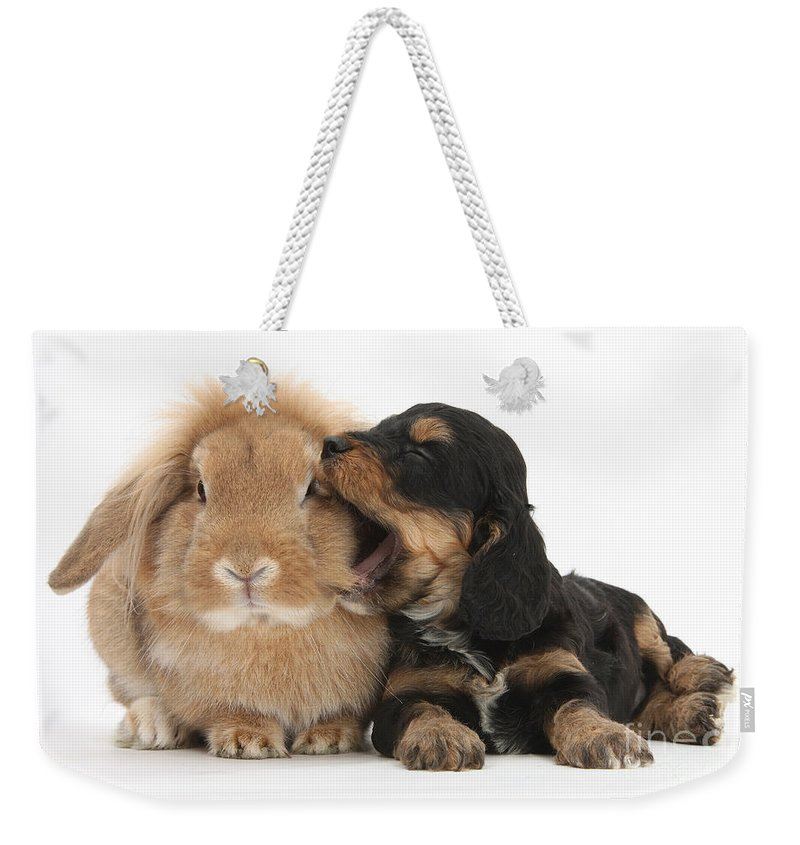 Nature Weekender Tote Bag featuring the photograph Cockerpoo Pup And Lionhead-lop Rabbit by Mark Taylor