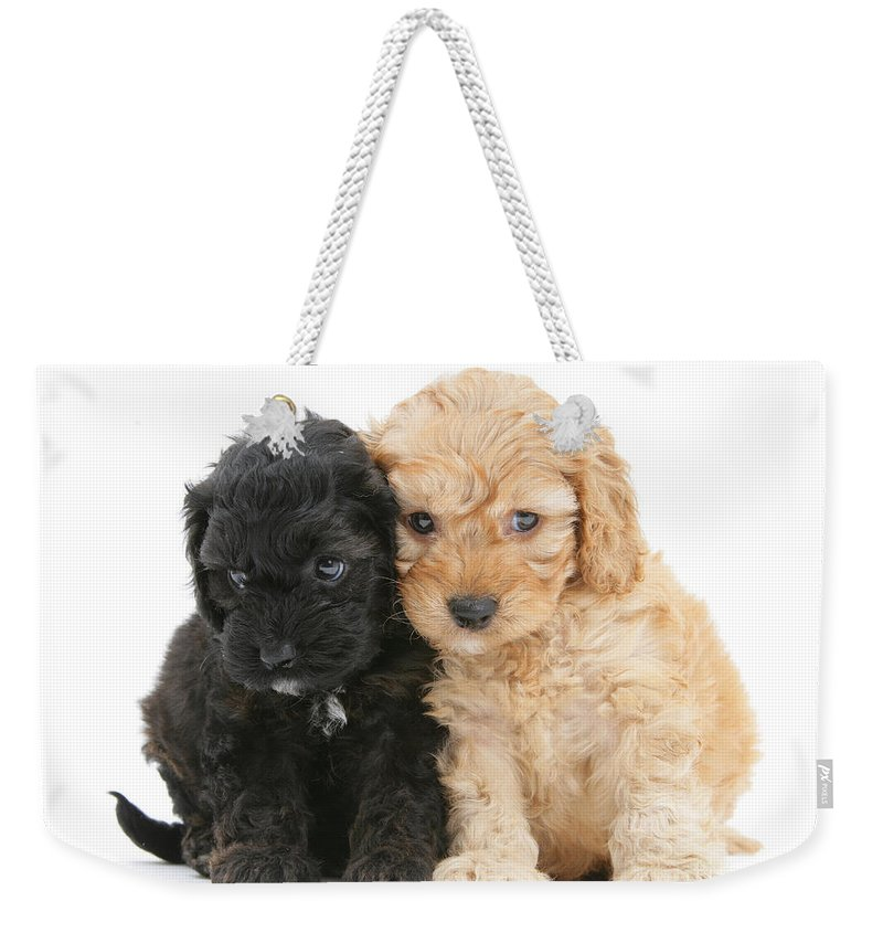 Animal Weekender Tote Bag featuring the photograph Cockerpoo Puppies by Mark Taylor