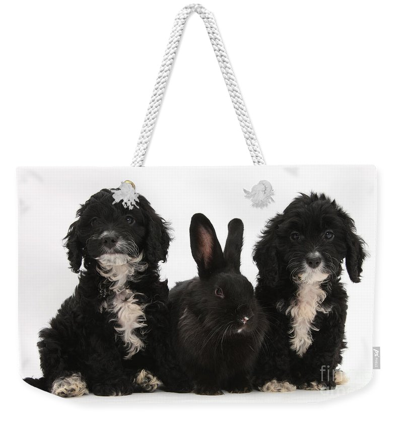 Animal Weekender Tote Bag featuring the photograph Cockerpoo Pups And Rabbit by Mark Taylor