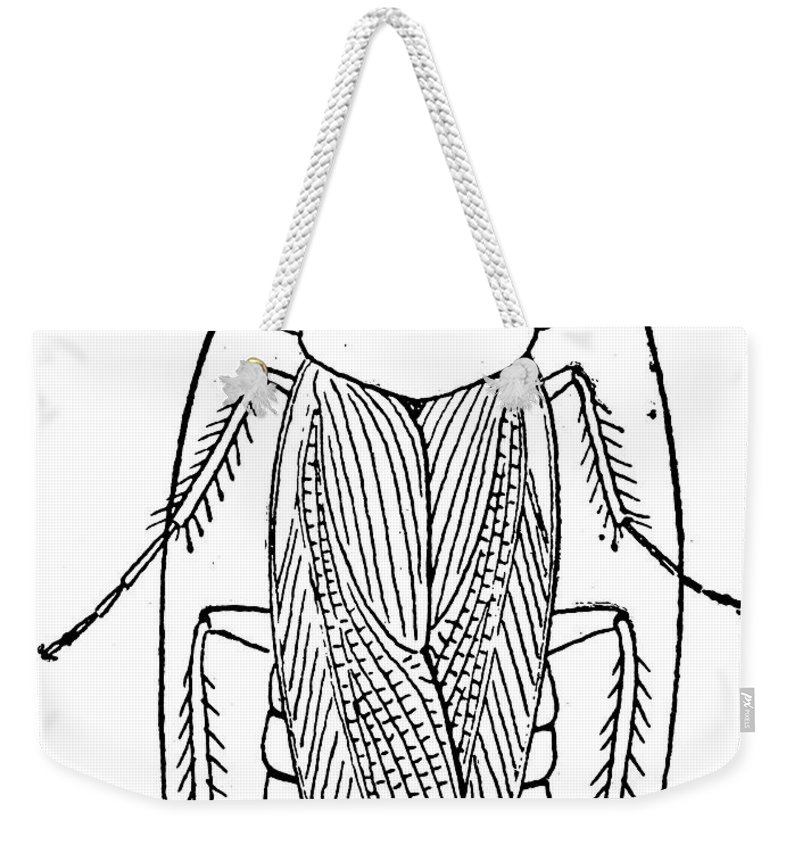 Animal Weekender Tote Bag featuring the photograph Cockroach by Granger