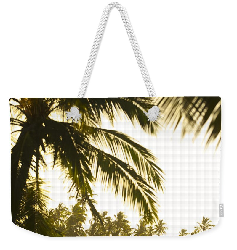 Photography Weekender Tote Bag featuring the photograph Coconut Palm Trees On The Coast by Jad Davenport