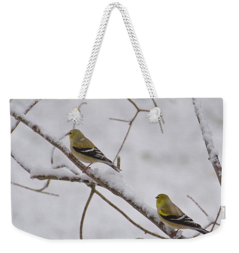 Usa Weekender Tote Bag featuring the photograph Cold Yellow Finch Walk by LeeAnn McLaneGoetz McLaneGoetzStudioLLCcom
