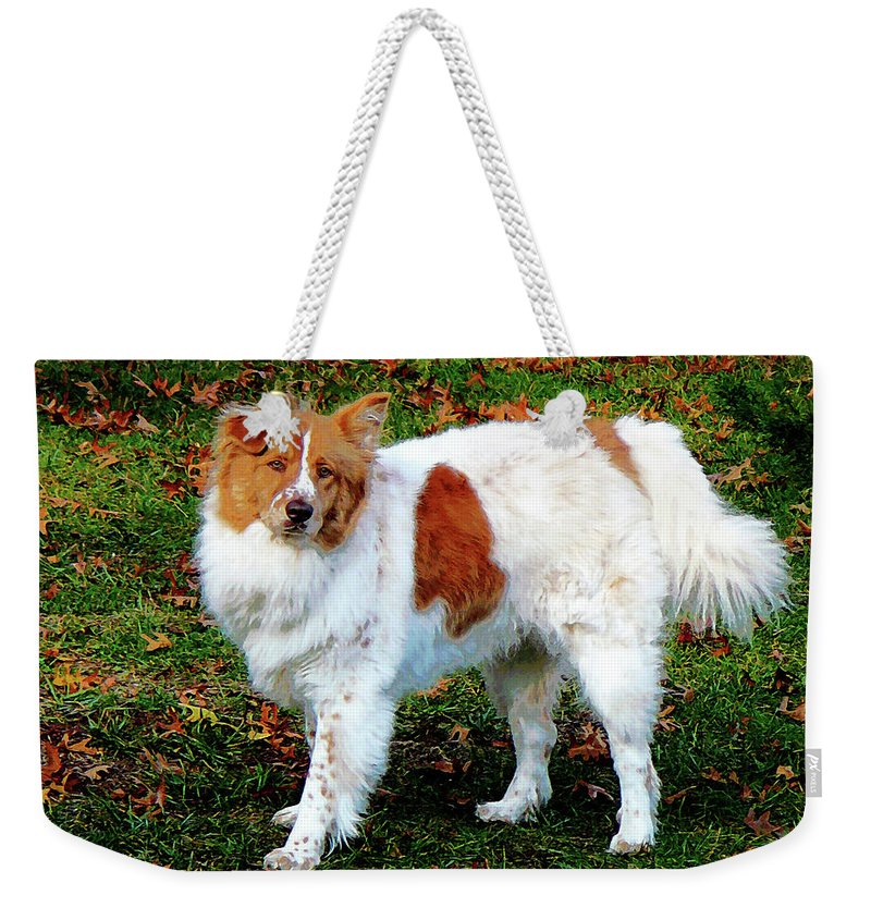 Dog Weekender Tote Bag featuring the photograph Collie On Lawn by Susan Savad
