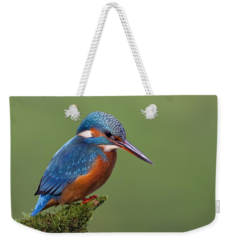 Mp Weekender Tote Bag featuring the photograph Common Kingfisher Alcedo Atthis by Ingo Arndt