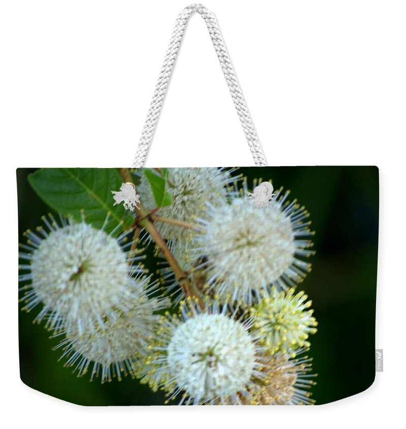Florida Weekender Tote Bag featuring the photograph Contemplation by Kari Tedrick