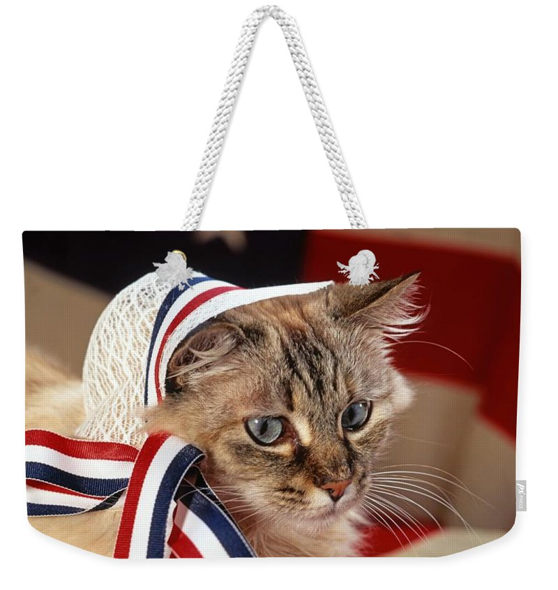 Mixed Breed Cat Weekender Tote Bag featuring the photograph Contemplative Patriot by Larry Allan