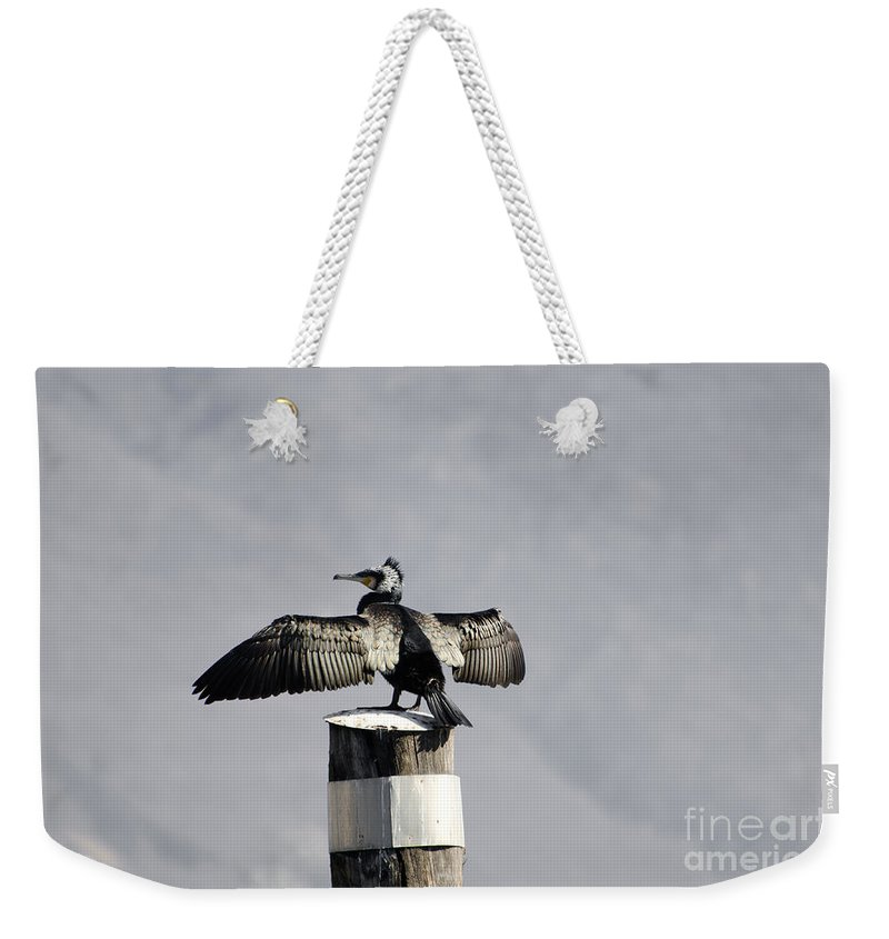 Cormorant Weekender Tote Bag featuring the photograph Cormorant Bird by Mats Silvan