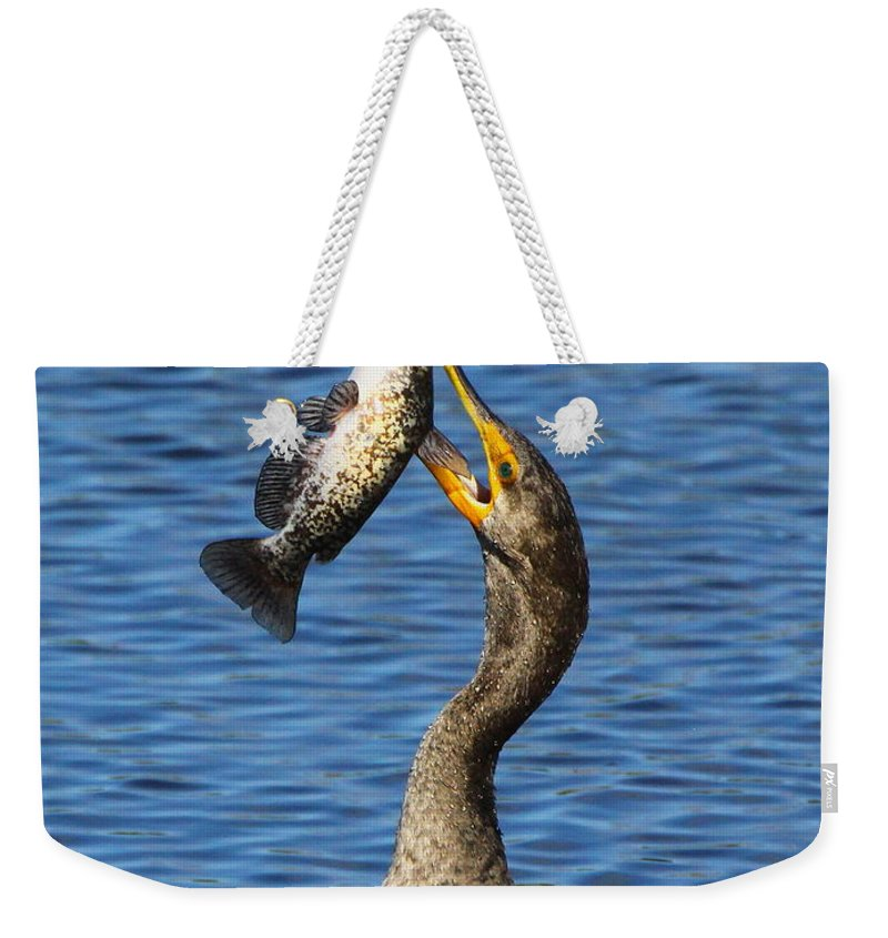 Double Crested Cormorant Weekender Tote Bag featuring the photograph Cormorant Catches Catfish by Barbara Bowen
