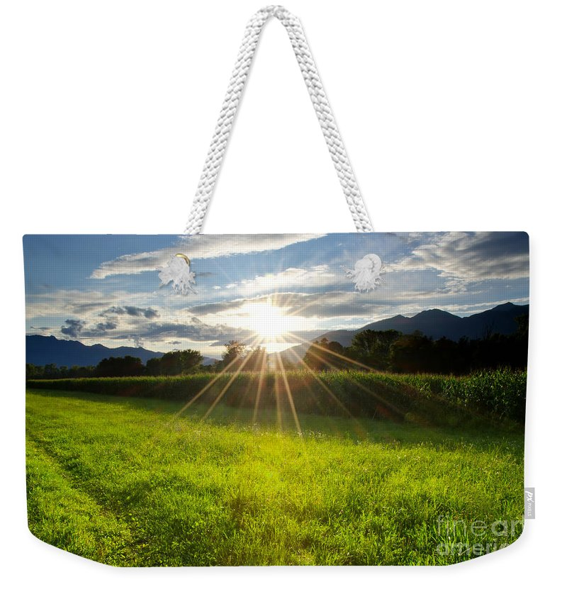 Corn Weekender Tote Bag featuring the photograph Corn Field In Backlight by Mats Silvan