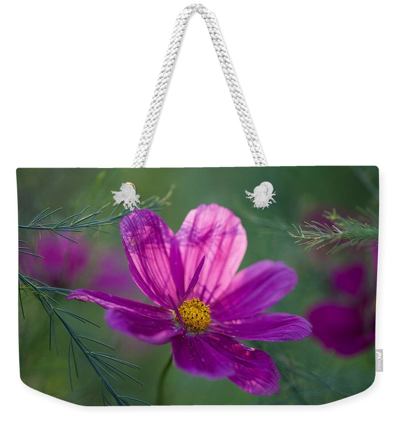 Flower Weekender Tote Bag featuring the photograph Cosmos Dreamland by Mike Reid