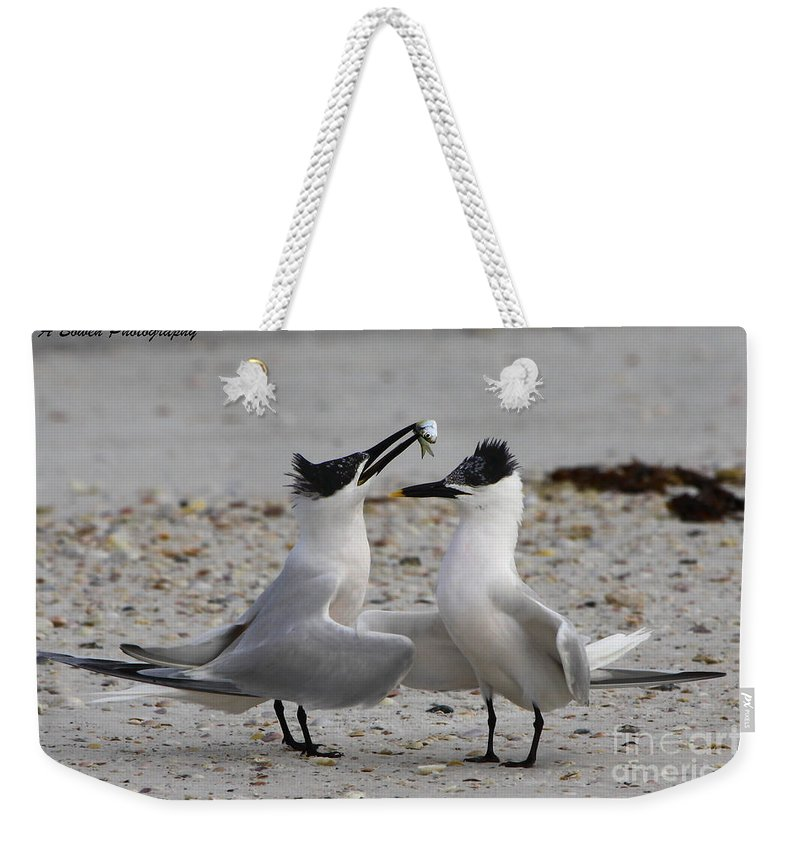 Sandwich Tern Weekender Tote Bag featuring the photograph Courtship by Barbara Bowen