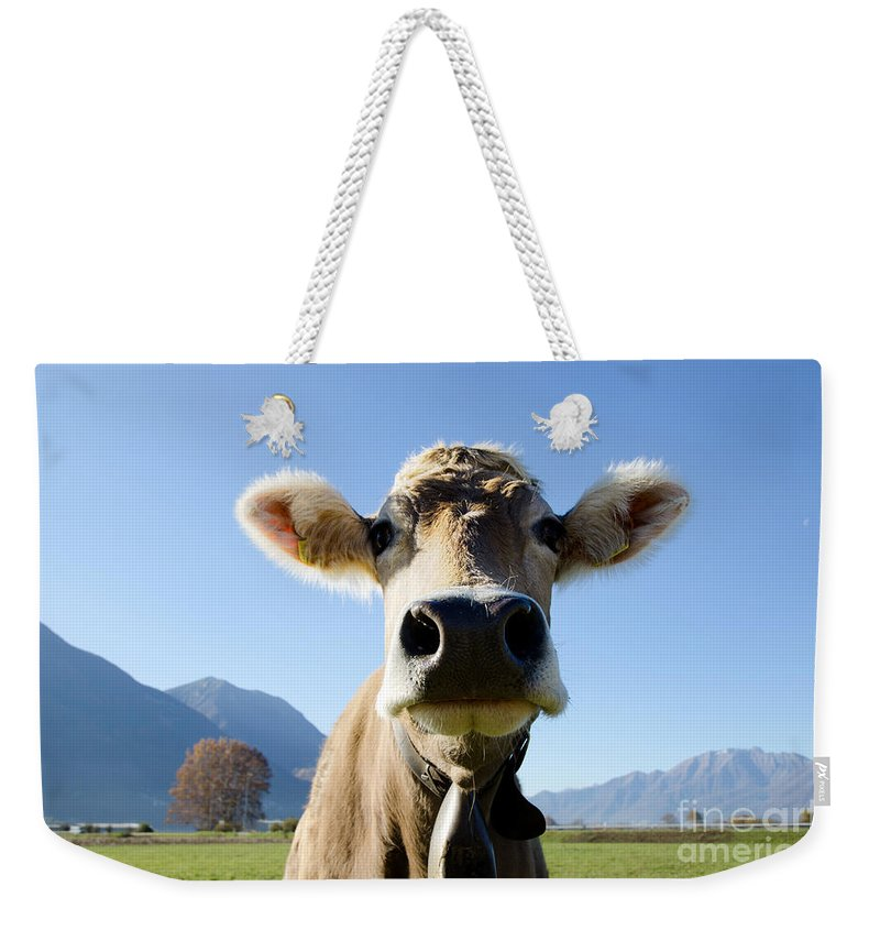 Cow Weekender Tote Bag featuring the photograph Cow With A Bell by Mats Silvan