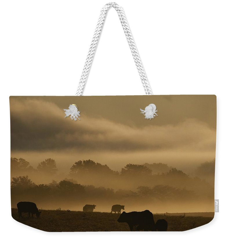 Scenes And Views Weekender Tote Bag featuring the photograph Cows Are Silhouetted In A Field by Sam Kittner