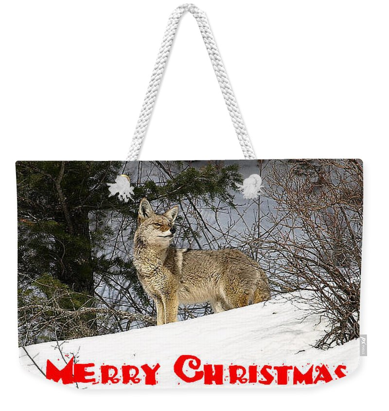 Christmas Cards Weekender Tote Bag featuring the photograph Coyote Christmas by DeeLon Merritt