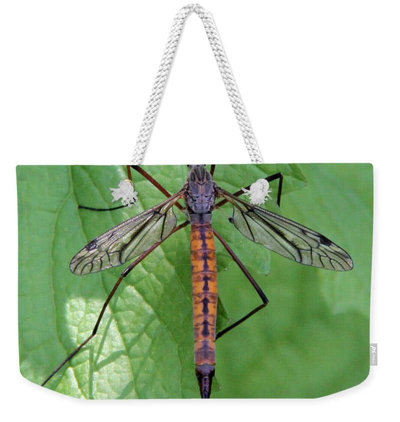 Crane Fly Weekender Tote Bag featuring the photograph Crane Fly by Doris Potter