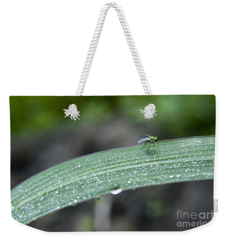 Grass Weekender Tote Bag featuring the photograph Crawling Along by Darleen Stry