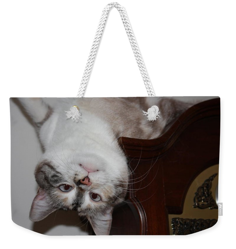 My Cat Weekender Tote Bag featuring the photograph Crazy Cat by Kristin Elmquist