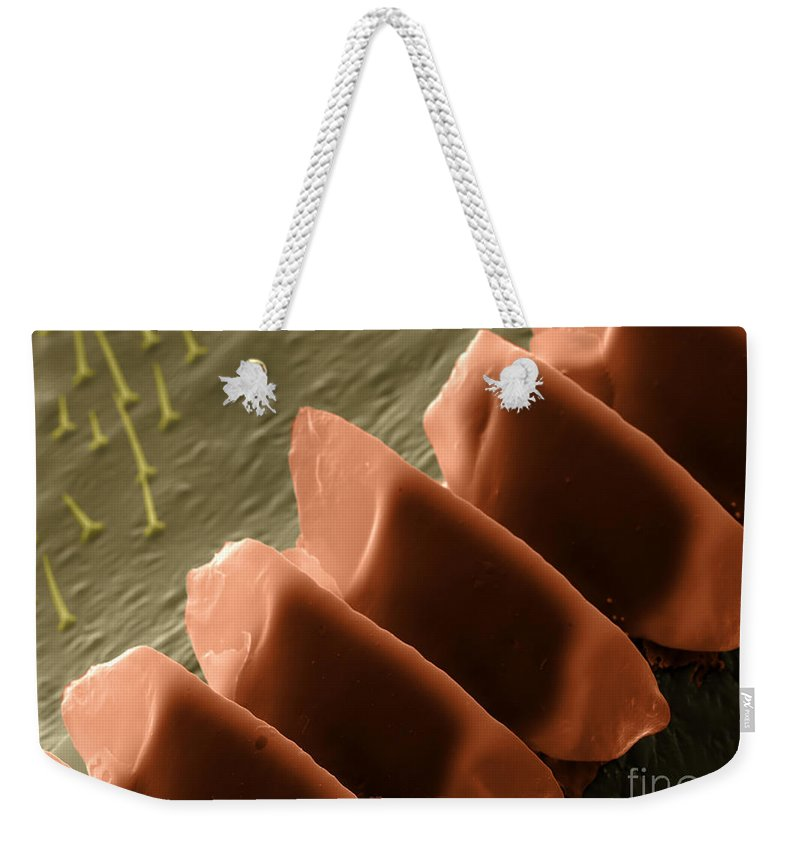 Field Cricket Weekender Tote Bag featuring the photograph Cricket Sound Comb, Sem by Ted Kinsman