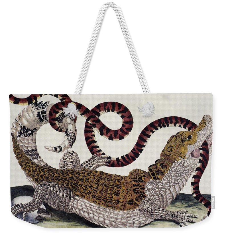 1705 Weekender Tote Bag featuring the photograph Crocodile & Snake by Granger