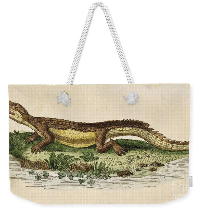 1799 Weekender Tote Bag featuring the photograph Crocodile by Granger