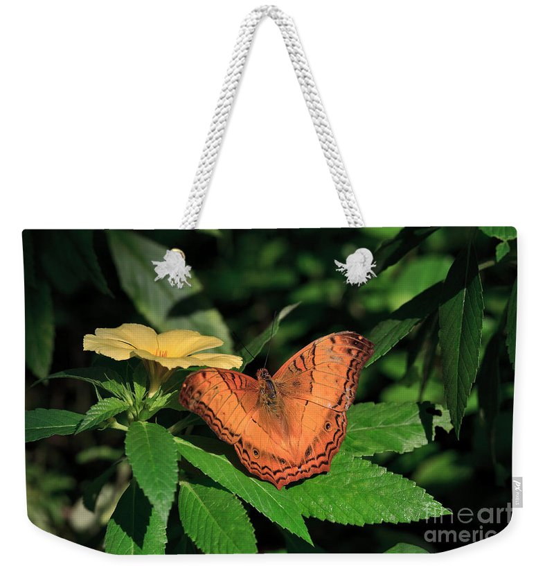 Pretty Weekender Tote Bag featuring the photograph Cruiser Butterfly by Louise Heusinkveld