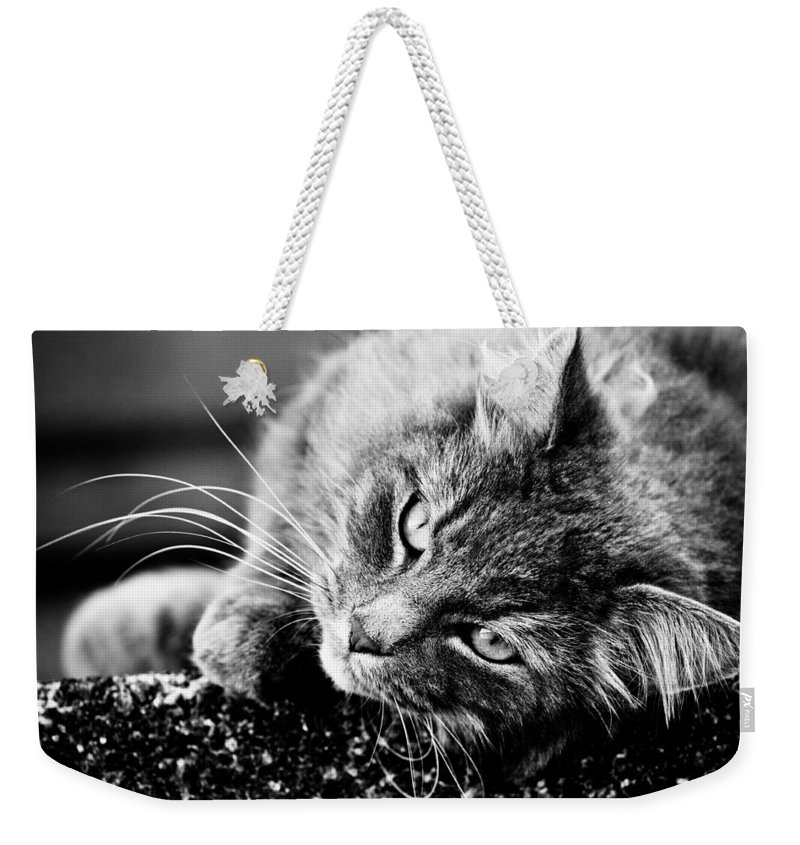 Canon Weekender Tote Bag featuring the photograph Cuddly Cat by Hakon Soreide