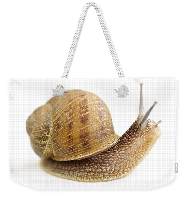 Snail Weekender Tote Bag featuring the photograph Curious Snail by Elena Elisseeva