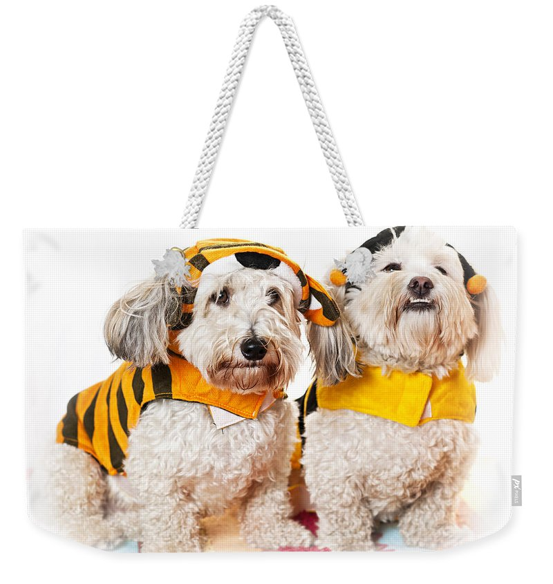 Dogs Weekender Tote Bag featuring the photograph Cute Dogs In Halloween Costumes by Elena Elisseeva