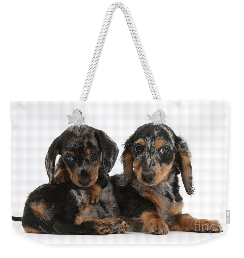 Dog Weekender Tote Bag featuring the photograph Dachshund Pups by Mark Taylor