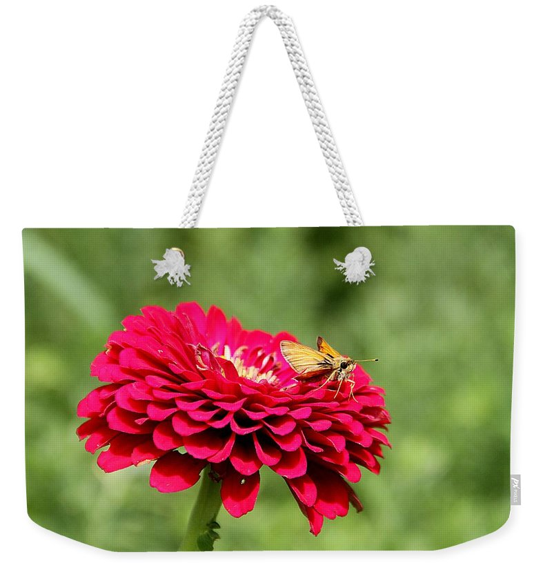 Dahlia Weekender Tote Bag featuring the photograph Dahlia's Moth by Elizabeth Winter