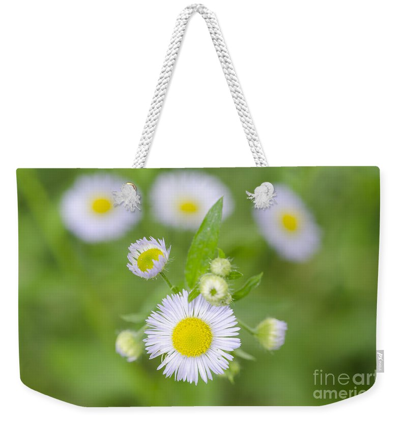Flowers Weekender Tote Bag featuring the photograph Daisy Flowers by Mats Silvan