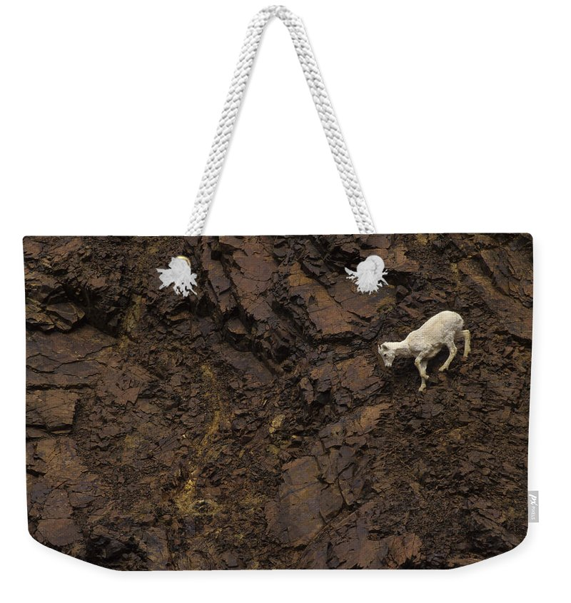 Nobody Weekender Tote Bag featuring the photograph Dall Sheep Were Is Very Adapt by Michael S. Quinton