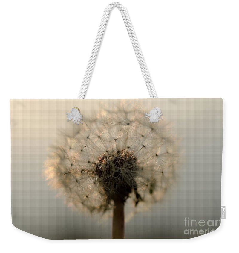Dandelion Weekender Tote Bag featuring the photograph Dandelion In Backlight by Mats Silvan