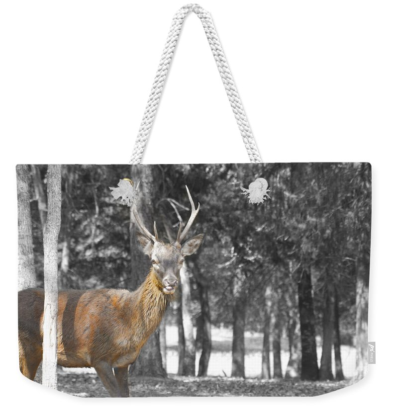 Deer Weekender Tote Bag featuring the photograph Deer In The Forest by Douglas Barnard