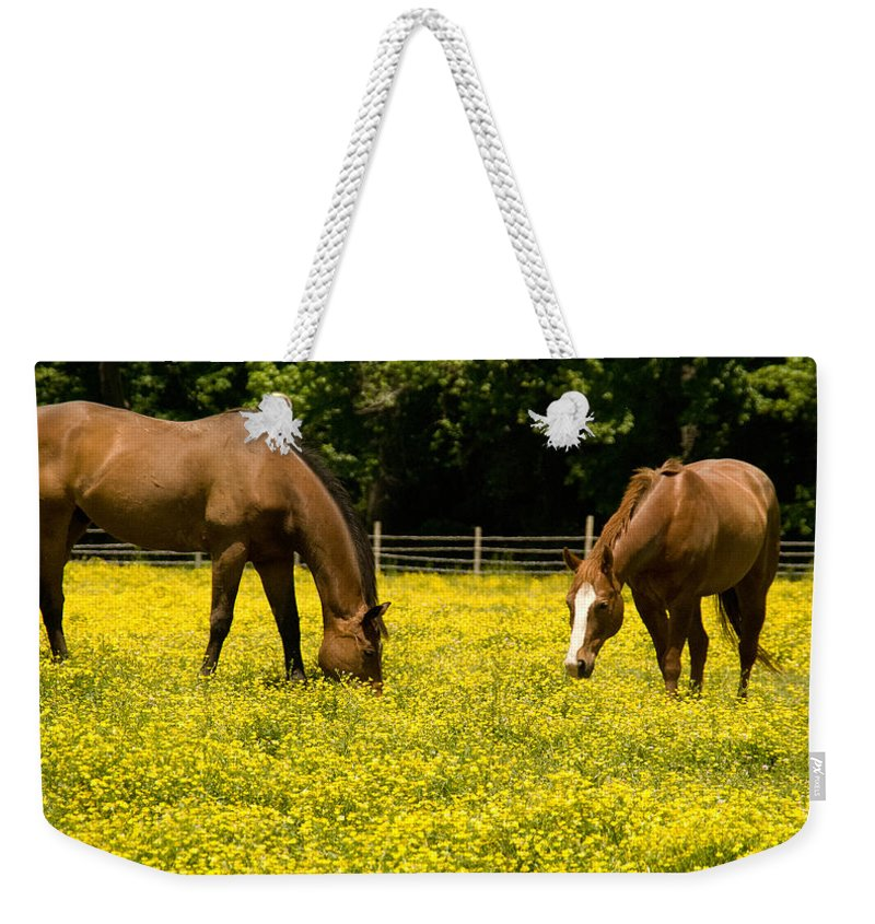Horse Weekender Tote Bag featuring the photograph Delaware Dandilions by Trish Tritz