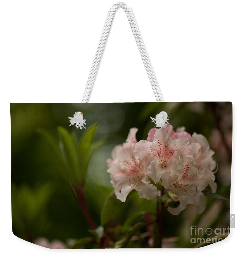 Rhodies Weekender Tote Bag featuring the photograph Delicately Peach by Mike Reid