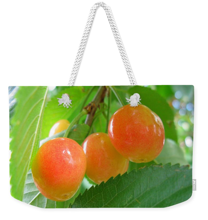 Agriculture Weekender Tote Bag featuring the photograph Delicious Plums On The Branch by Jeelan Clark