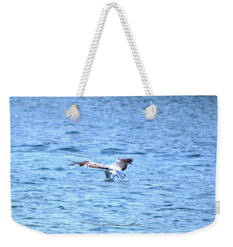 Seagull Weekender Tote Bag featuring the photograph Dive by Kari Tedrick
