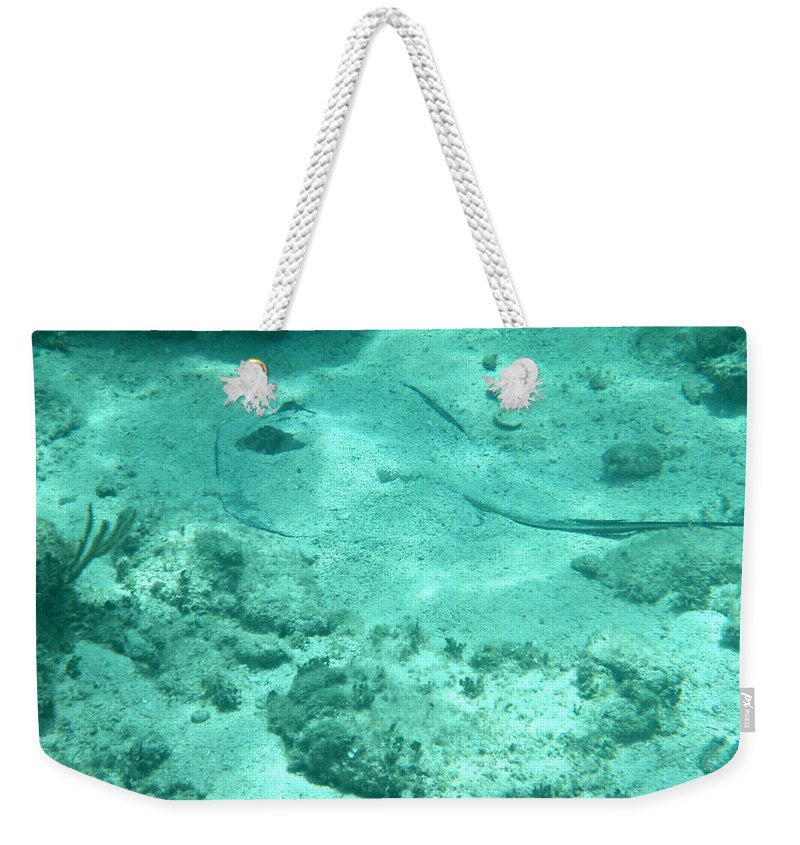Stingray Weekender Tote Bag featuring the photograph Do You See What I See? by Kimberly Perry