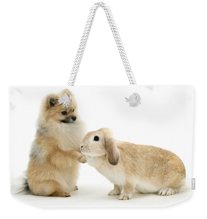 Animal Weekender Tote Bag featuring the photograph Dog And Rabbit by Mark Taylor