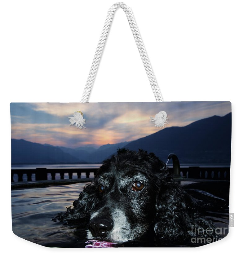 Dog Weekender Tote Bag featuring the photograph Dog In A Water Fountain by Mats Silvan