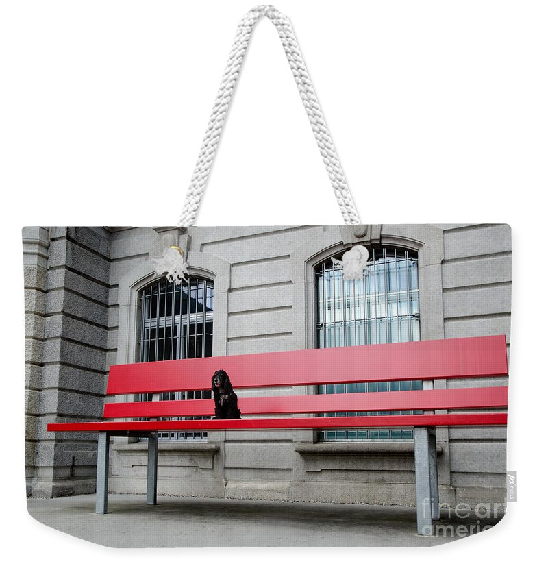 Dog Weekender Tote Bag featuring the photograph Dog On A Big Red Bench by Mats Silvan