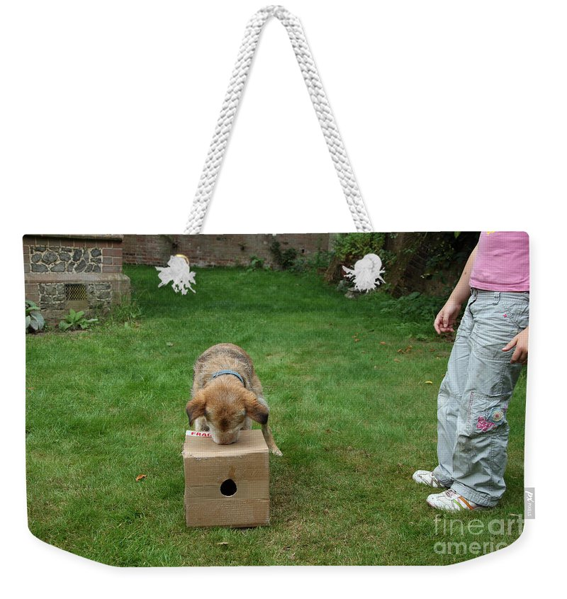 Animal Weekender Tote Bag featuring the photograph Dog Playing by Mark Taylor