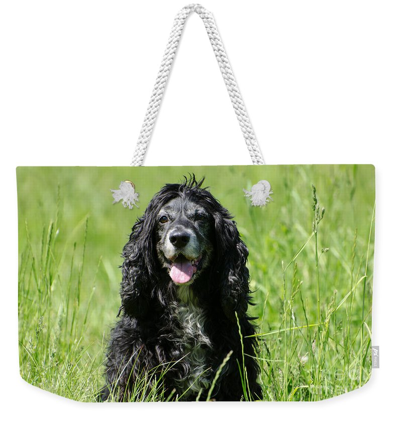 Dog Weekender Tote Bag featuring the photograph Dog Sitting On The Green Grass by Mats Silvan