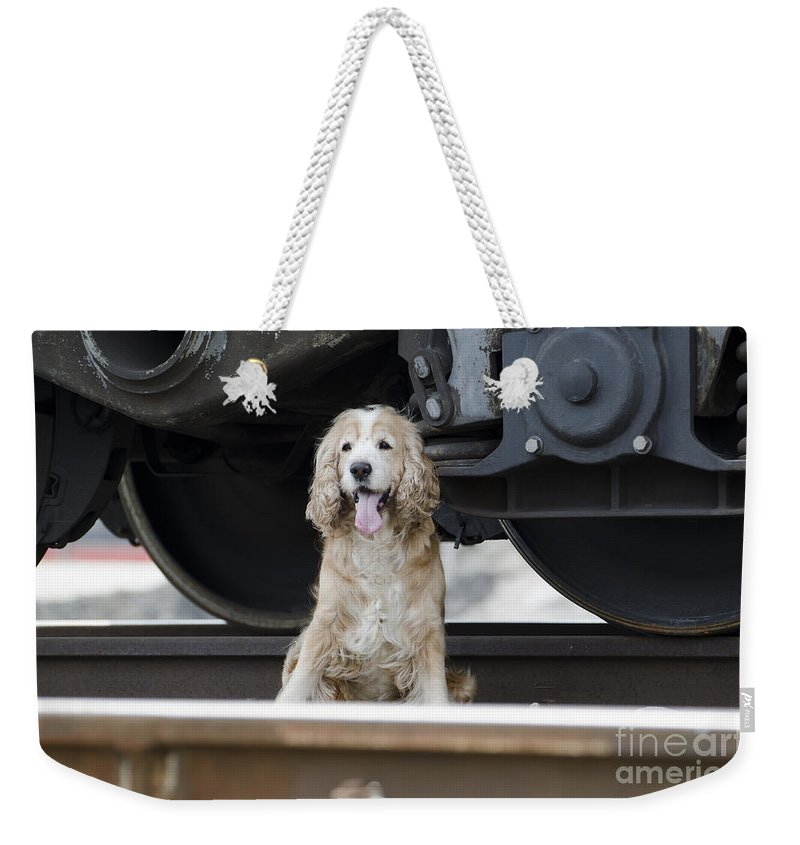 Dog Weekender Tote Bag featuring the photograph Dog Under A Train Wagon by Mats Silvan