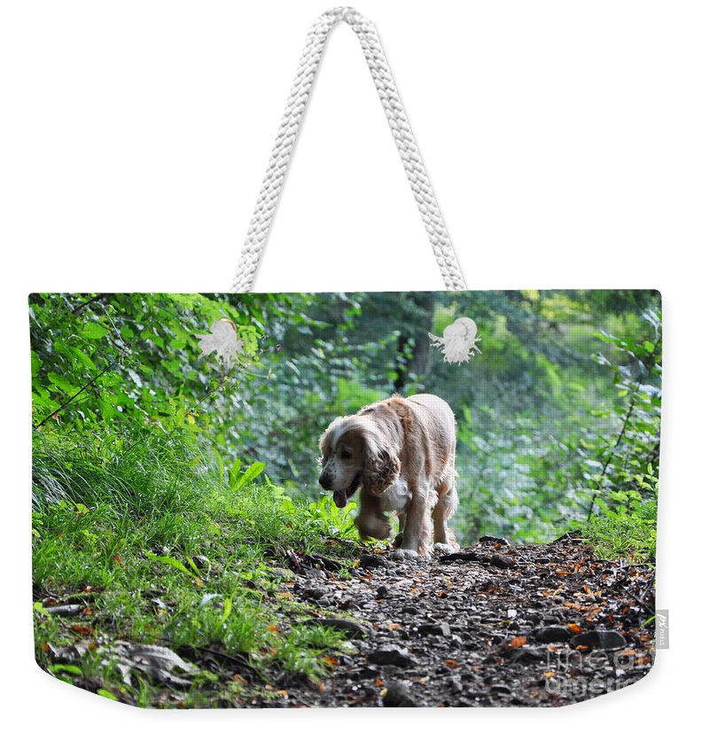 Dog Weekender Tote Bag featuring the photograph Dog Walking by Mats Silvan